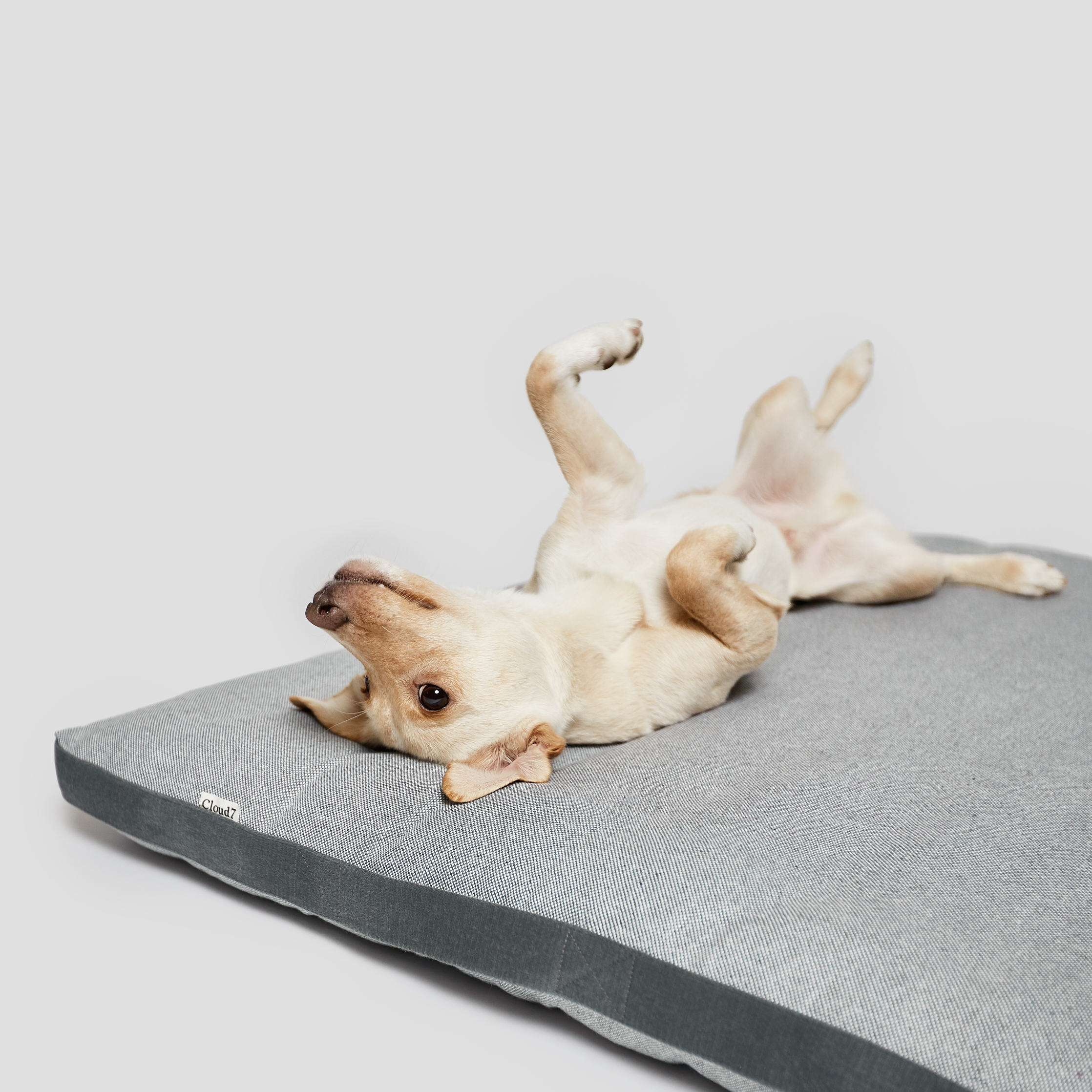 Cloud7-Dog-Bed-Siesta-Tweed-Grey-Dog-3